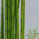 Bambus, Steine und Frosch